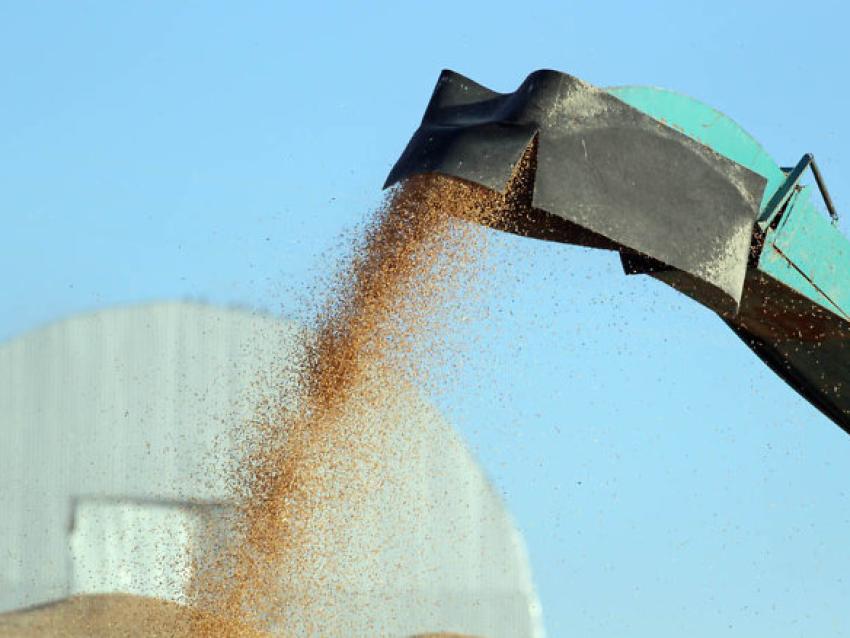Урожайность зерновых культур в Забайкалье превышает прошлогодний уровень