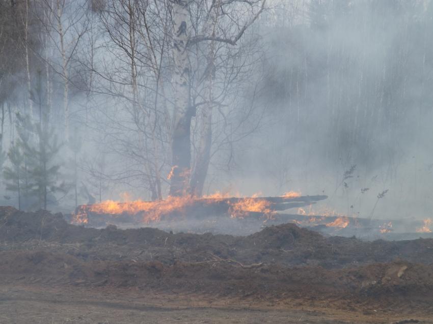 В Забайкальском крае выявлены виновники в возникновении лесных пожаров