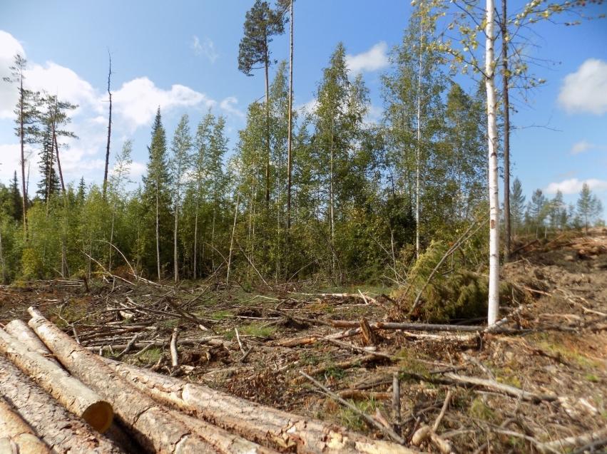 В Забайкалье выявлено 1 500 кубометров незаконно вырубленной древесины