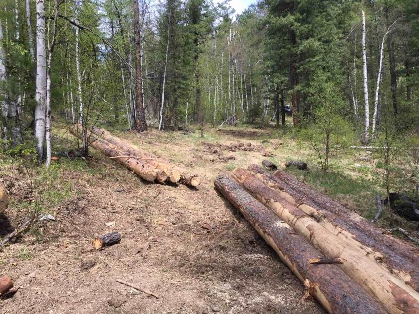 В Забайкальском крае за неделю выявлено 11 случаев незаконной рубки