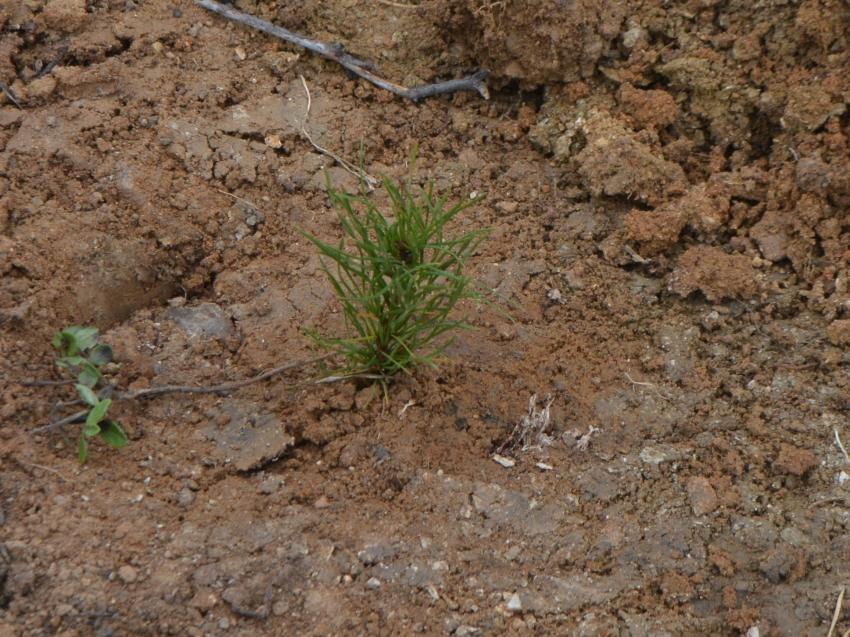 В питомнике Забайкалья планируется вырастить около трёх миллионов сеянцев для посадки леса