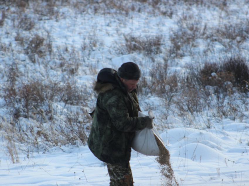 Более 10 тонн соли для подкормки диких животных разместили в заказниках Забайкалья