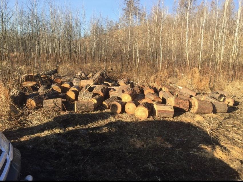 Сегодня на публичных обсуждениях правоприменительной практики рассматривались результаты работы Минприроды Забайкальского края в области организации деятельности пунктов приема и отгрузки древесины и противодействия незаконному обороту древесины на территории Забайкальского края за 2020 год