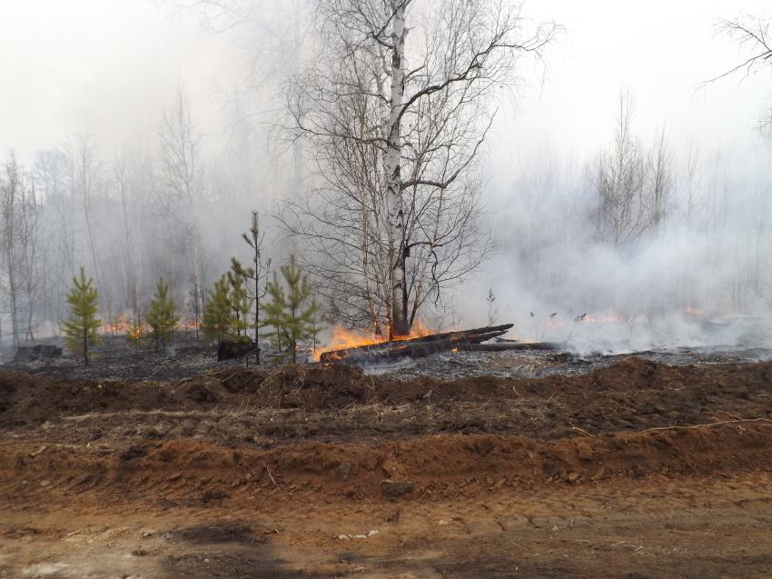 В Читинском районе Забайкалья зафиксирован лесной пожар