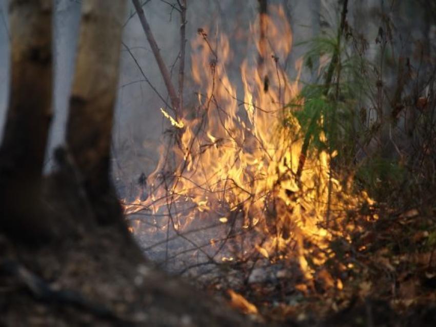 В Читинском районе Забайкалья ликвидировано три лесных пожара