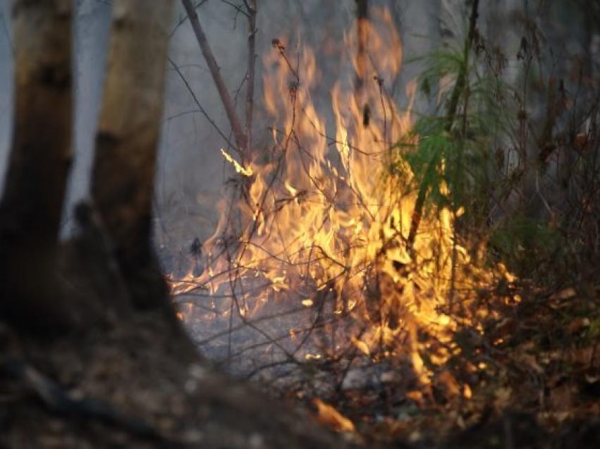 Минприроды: На территории Забайкалья действуют три лесных пожара