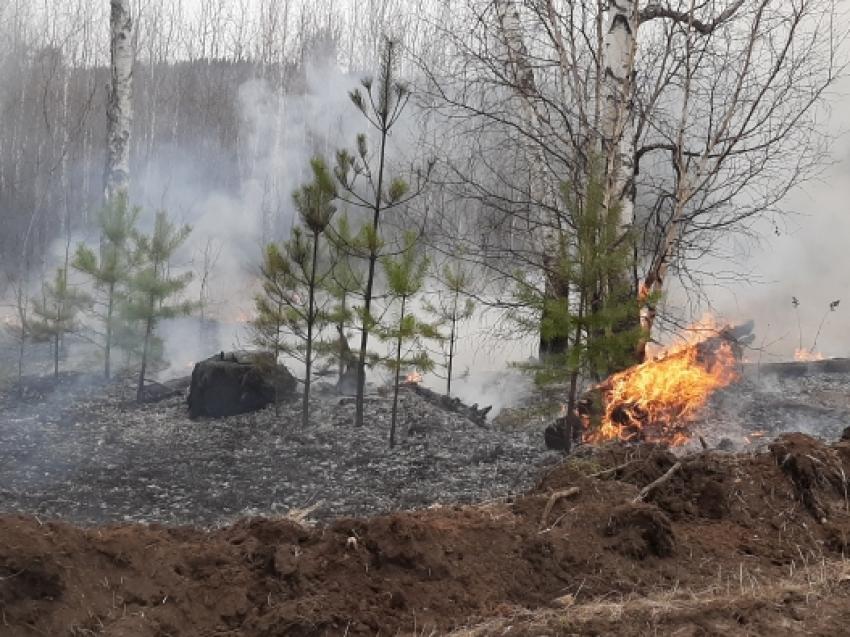 Минприроды: На территории Забайкалья ликвидирован лесной пожар площадью около 300 гектаров