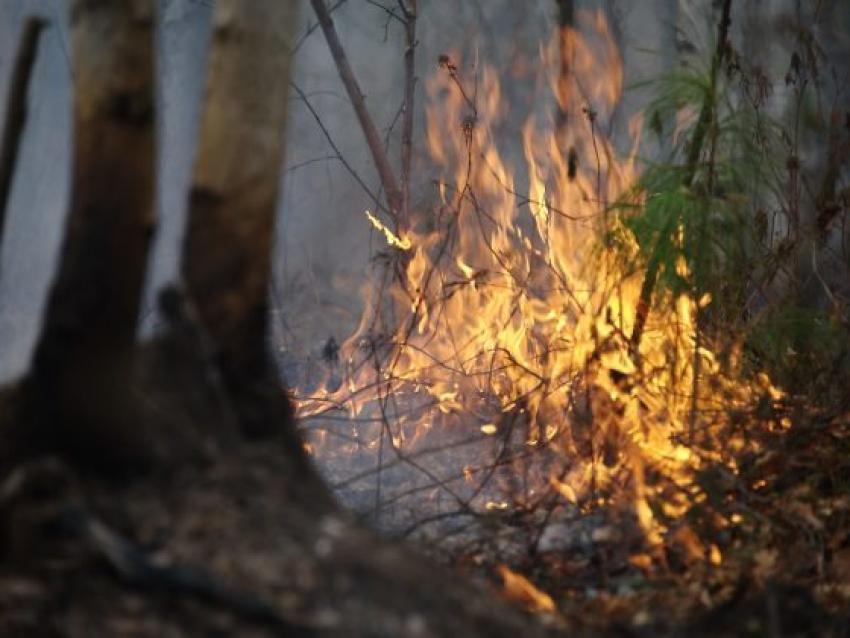 Минприроды: 21 апреля на территории Забайкалья действуют 11 пожаров