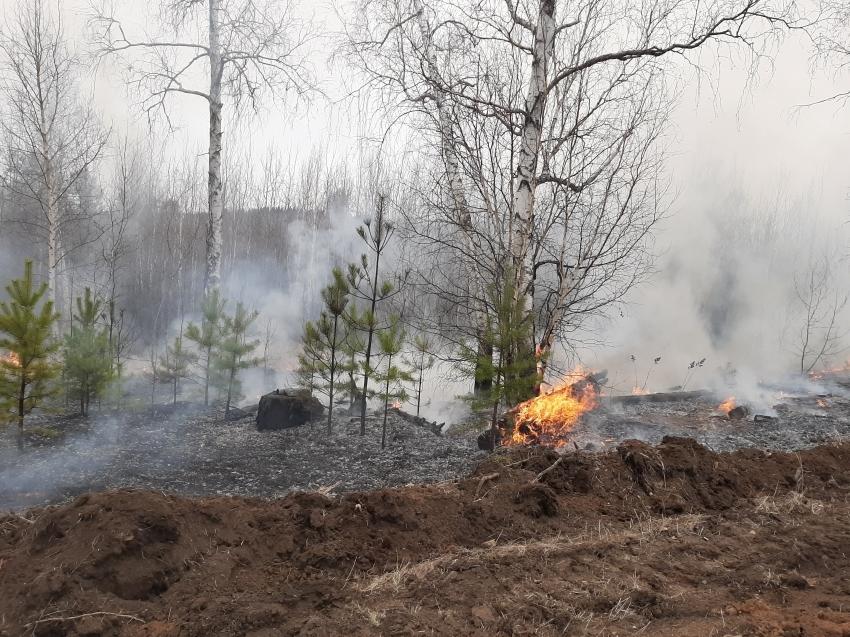Лесопожарные формирования тушат три лесных пожара в Забайкалье