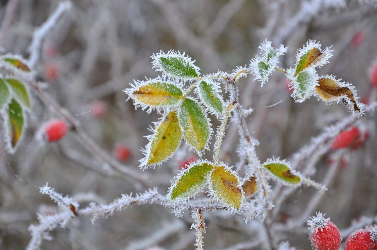 Штормовое предупреждение объявлено в Забайкалье в связи с возможными заморозками