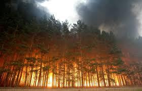 Правила действий при возникновении природных пожаров
