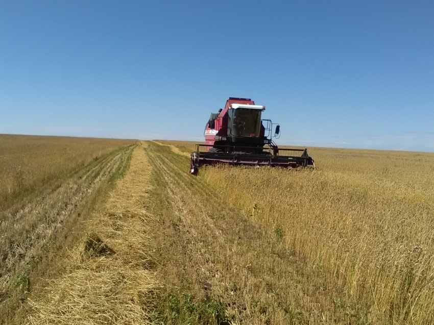 Более 61,2 тыс. гектаров зерновых убрано с полей Забайкальского края
